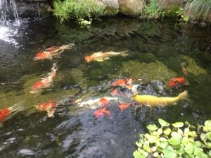 Ecosystem Fish Ponds