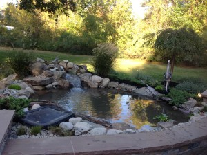 How much does an ecosystem fish pond cost a frog 39 s dream for Koi pond installation cost